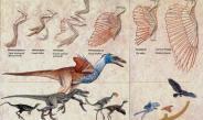 Evrim teorisi gerçek mi Evham mı?